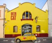 beercat2